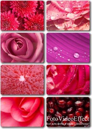 Клипарт - Цветы, гранат, грейпфрут