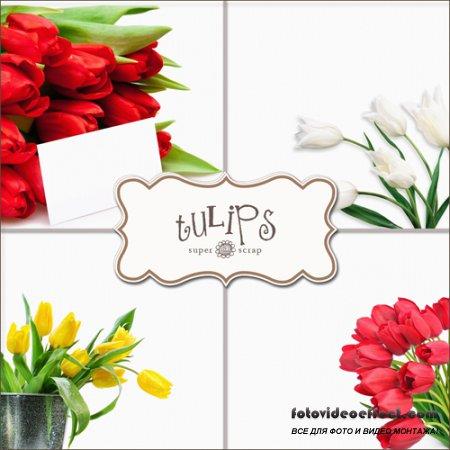 Textures - Tulips #2