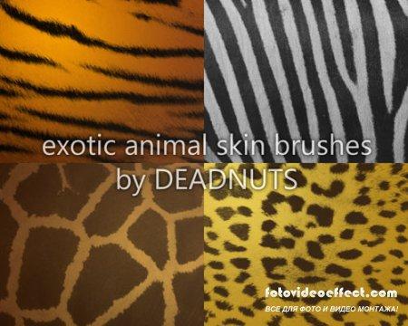 Экзотические кисти шкур животных