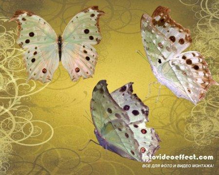 Клипарт - Перламутровые бабочки