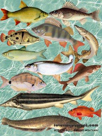 Промысловые Виды Рыб PSD