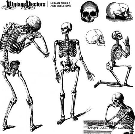Human Skulls and Skeletons Vector Set