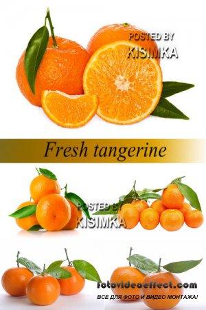 Stock Photo: Fresh tangerine
